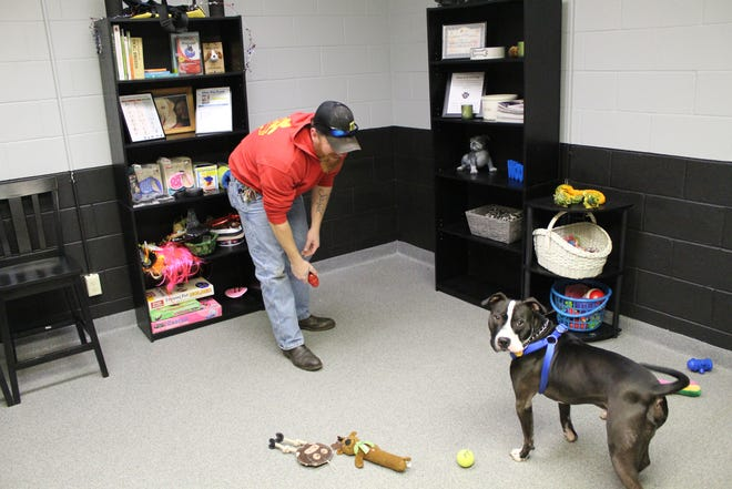 Pit bull Jackson plays with owner Geoffrey Young in the meeting room at the Sandusky County Dog Warden's Office.