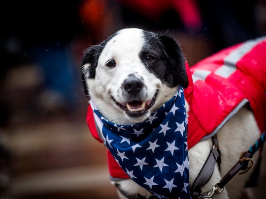 A patriotic dog during Knoxville's 93rd Veterans Day Parade held in downtown Knoxville on Friday, November 9, 2018.