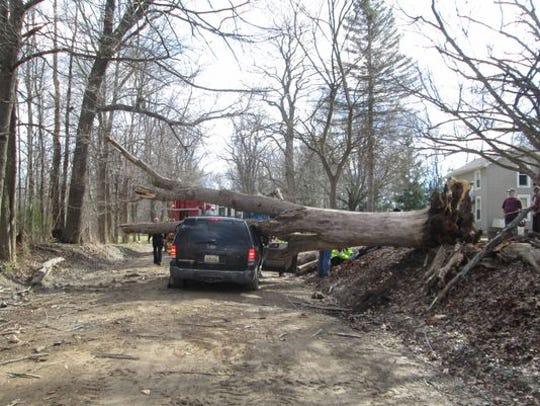 A March 2016 file photo of the Ford Exploxer driven by 26-year-old Gary Cox, of Gregory, who was killed when a large tree fell on his vehicle in Livingston County. Ron Goodger has identified the tree as a dead ash.