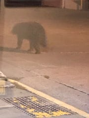 A photo by Jennifer Benson of a black bear outside The Blue Heron BrewPub on Thursday night in Marshfield.