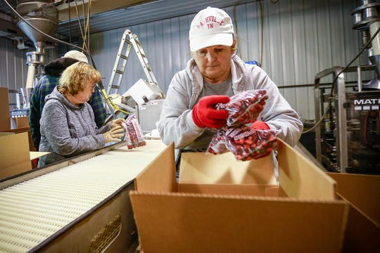 Workers Judy Foss (right) and Mary Shepherd pack cranberries into boxes.
