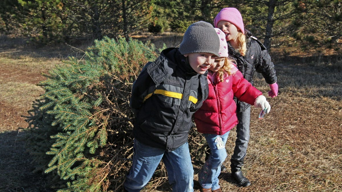 Christmas Tree Farms In Southeast Wisconsin