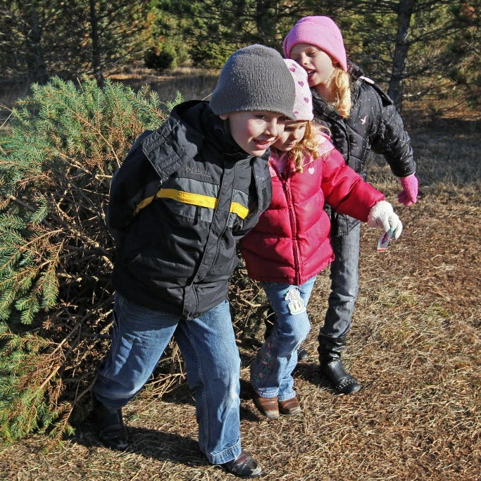 Where to cut down your own tree in Southeast Wisconsin for Christmas 2018