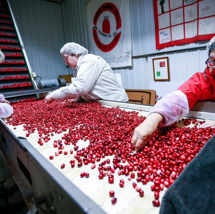 Faced with a glut of cranberries, growers could dump about 25 percent of the crop