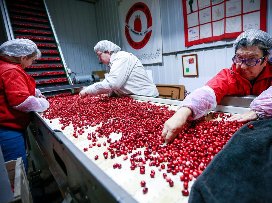 Glut of cranberries in Wisconsin means 25% of crop could be discarded