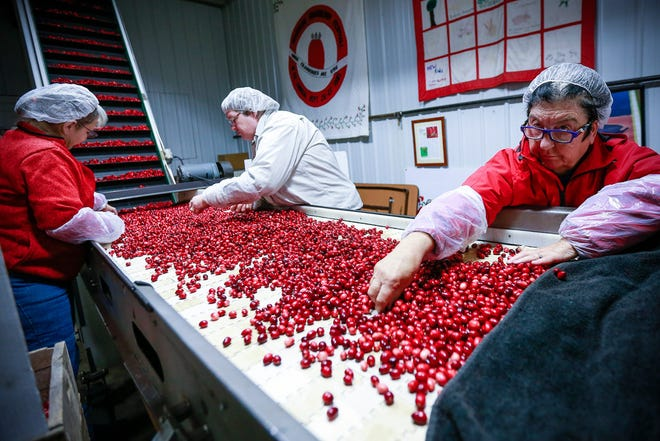 Cranberries are sorted at Wetherby Cranberry Co., in Warren, before they're shipped to grocery stores in Wisconsin and Minnesota.