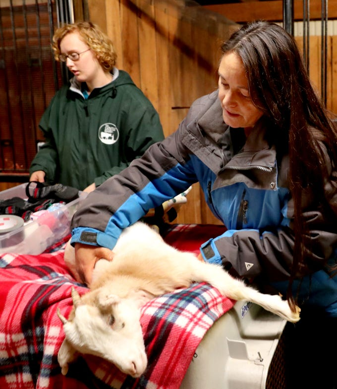 Ellie Lake, the Founder of the Gentle Barn lifts up Lolli from the table after her new prosthetic legs were attached so Lolli can walk, on Thursday Nov. 8, 2018.