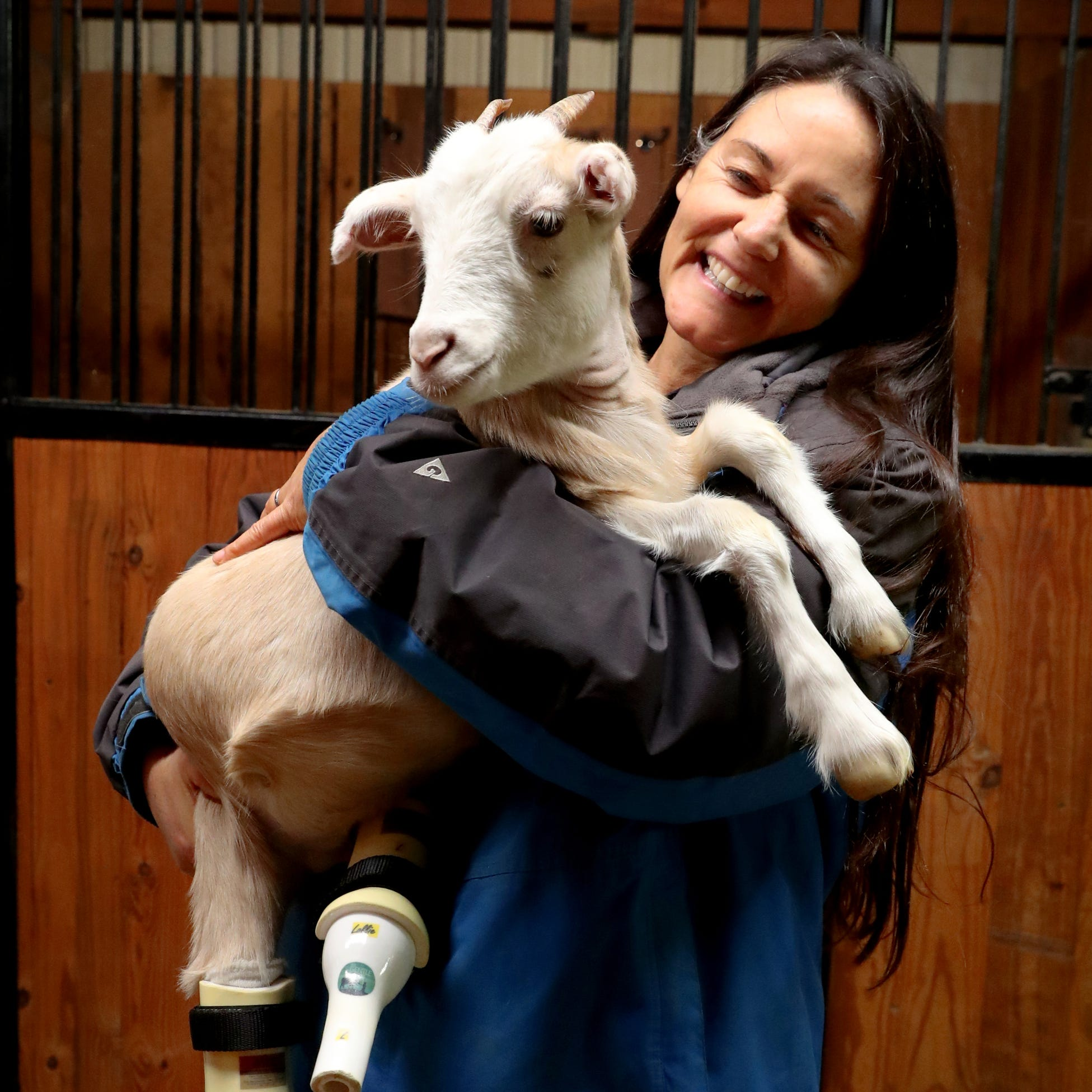 'Fancy feet': Lolli the goat gets prosthetic legs and new home at Murfreesboro's Gentle Barn