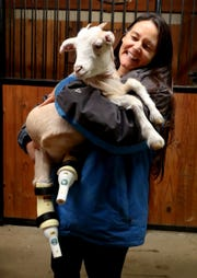 Ellie Laks, the founder of the Gentle Barn, holds Lolli as she shows off the goat's new prosthetic legs Thursday, Nov. 8, 2018.