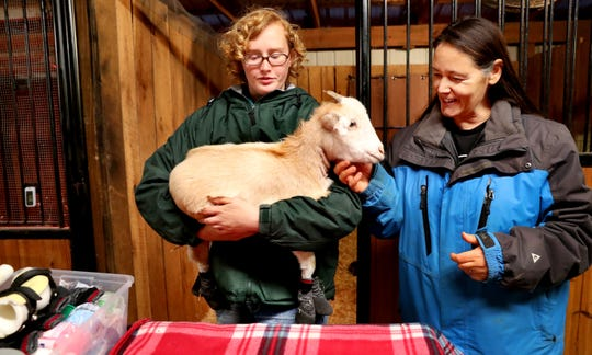 Tara Gibson, an animal caretaker at the Gentle Barn, removes Lolli from her stall as Ellie Laks, the founder of the Gentle Barn, greets the goat before Lolli's new prosthetic legs are attached.