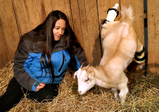 Ellie Lake, the Founder of the Gentle Barn cuddles with Lolli, on Thursday Nov. 8, 2018, as Lolli, kicks and tries out her new prosthetic back legs.
