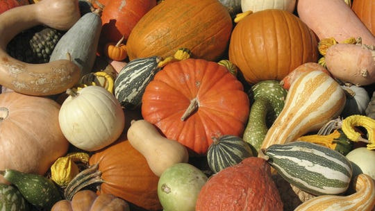 when you're done with pumpkins, roast the seeds for a delicious, healthy snack.