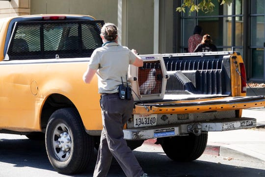 Los Angeles Zoo employees begin evacuating animals Friday, Nov. 9, 2018, as fires rage nearby.