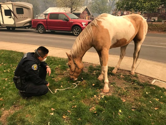 A stray horse munches on grass as a Rocklin police officer watches over it. Those pets, farm animals and wildlife have been displaced by the Camp Fire's advance.