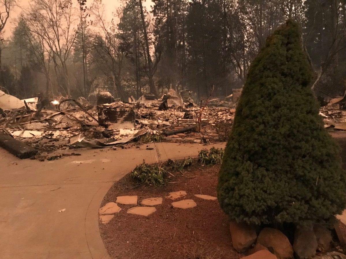 A tree survived the the Camp Fire on its Paradise property, but the house to which it was attached didn't.
