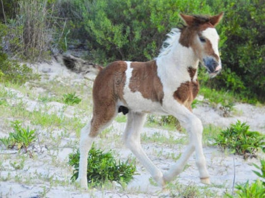 The foal known as N9BM-JQ.
