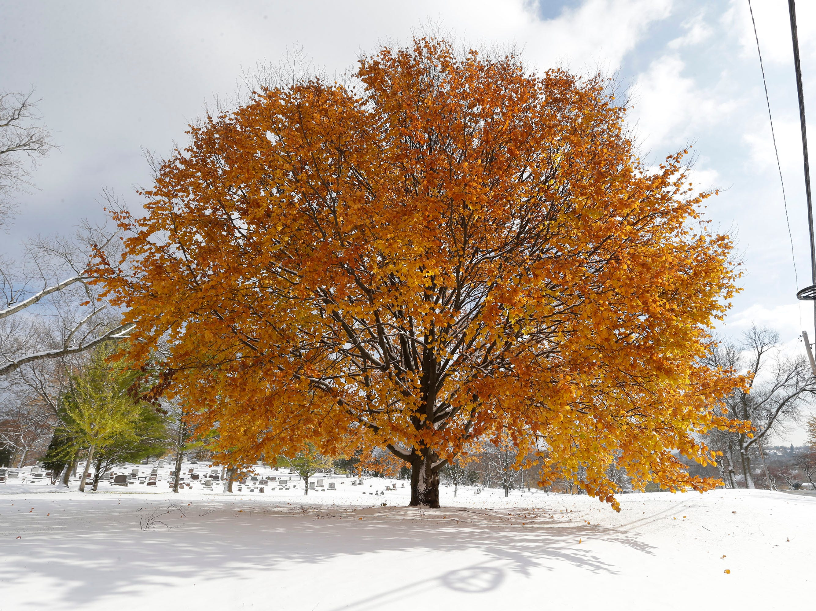 Leaves in full color along Evans contrast with the freshly fallen snow, Friday, November 9, 2018, in Sheboygan, Wis.