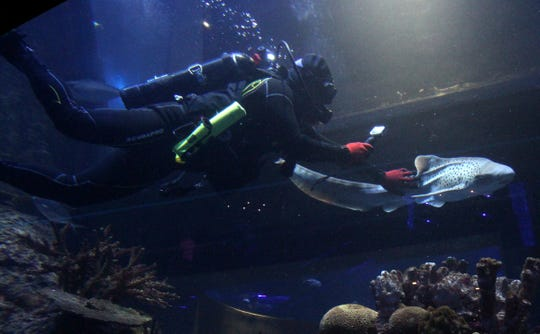 WOW aquarium plans to continue letting disabled veterans dive in its tanks, through the LifeWaters program.