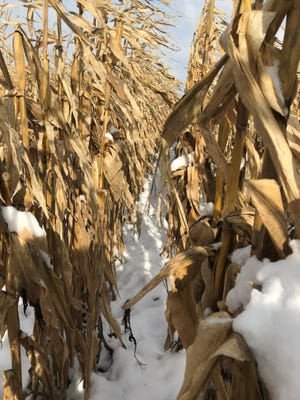 Wet weather, delayed harvest In 2019, forcing producers to leave more crops In fields over winter.