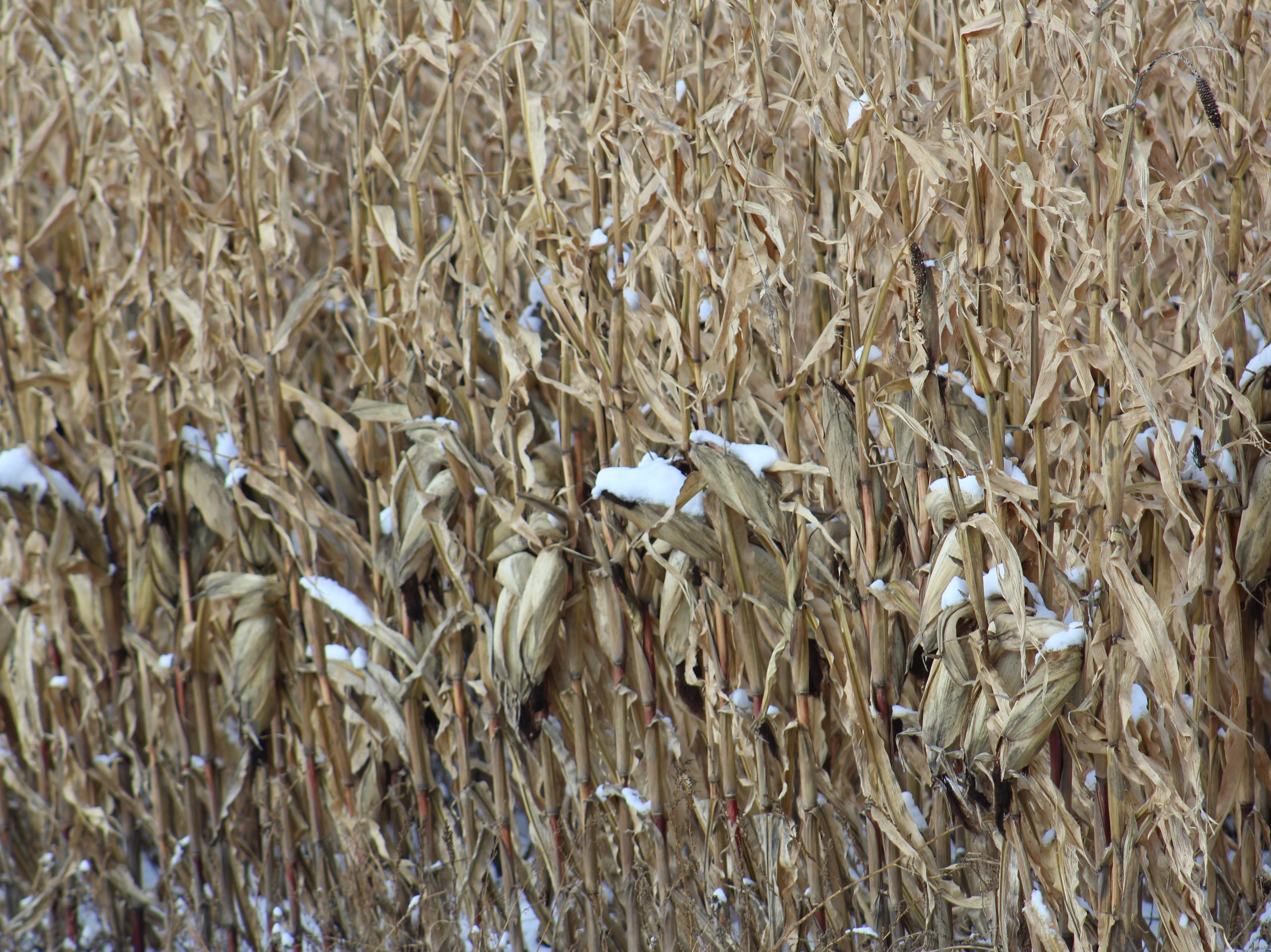 Recent weather systems have thwarted farmers' plans to get the remaining crops out of the field.