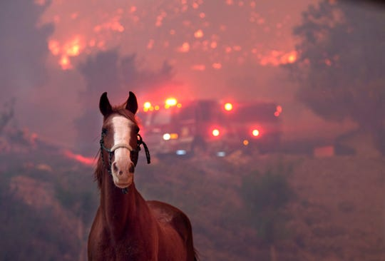 Horses are spooked as the Woolsey Fire moves through property near Paramount Ranch on Nov. 9, 2018, in Agoura Hills, Calif.