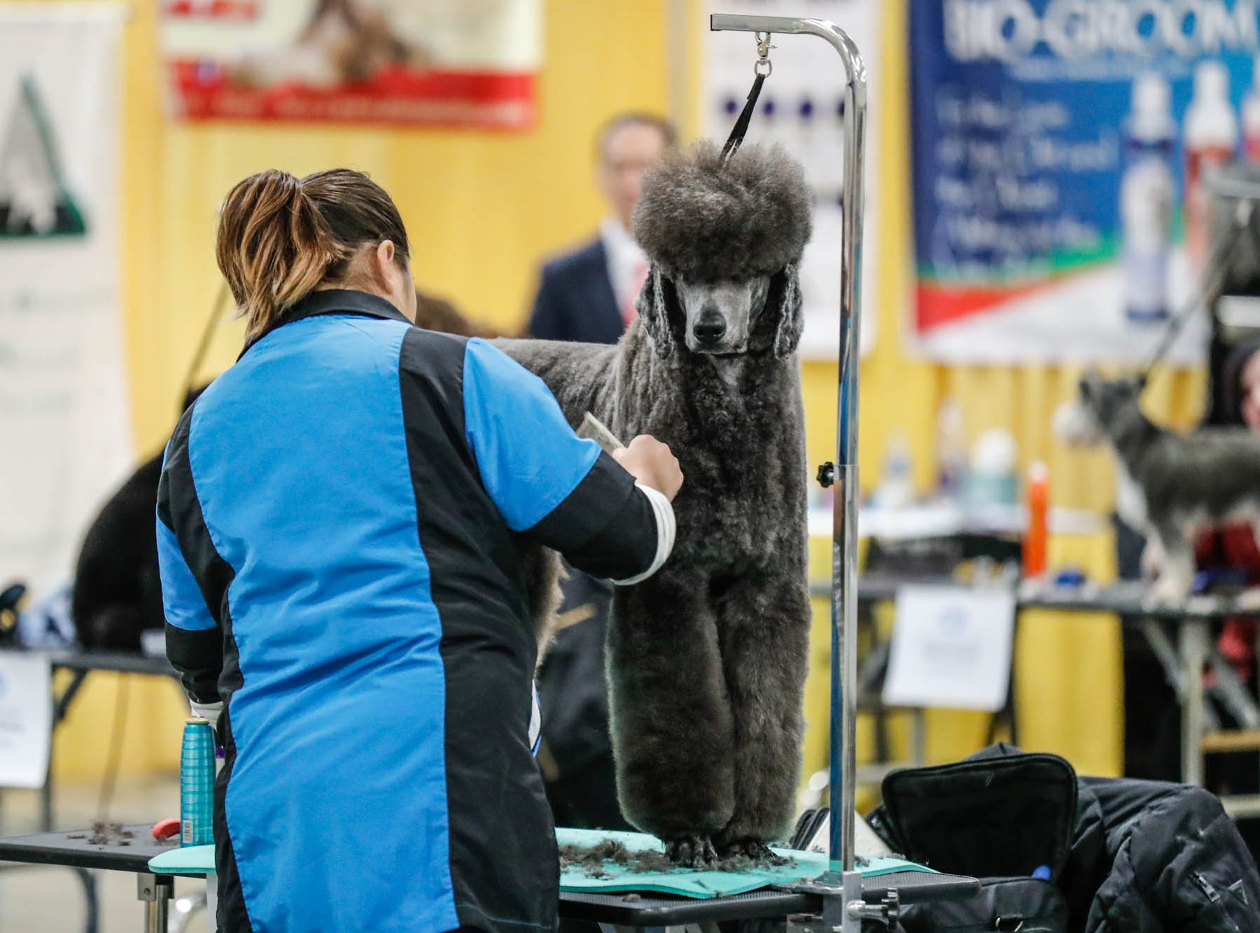 Dogs are groomed during the grooming competition at the Great Indy Pet Expo, held at the Indiana State Fairgrounds on Sat. Nov. 10, 2018.