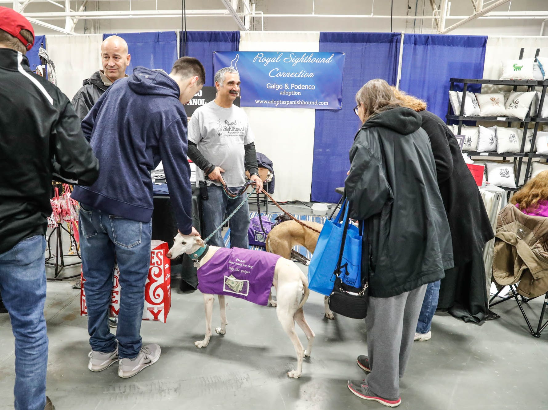 Spanish grey hounds meets and greets guests at the Royal Sighthound Connection booth at the Great Indy Pet Expo, held at the Indiana State Fairgrounds on Sat. Nov. 10, 2018. Royal Sighthound Connection rescues Spanish greyhounds and and podencos from overseas and helps to find them forever homes in the U.S.A.
