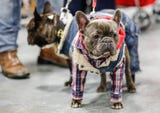 Meet the pets at the Great Indy Pet Expo at the Indiana State Fairgrounds on Saturday, Nov. 10, 2018.