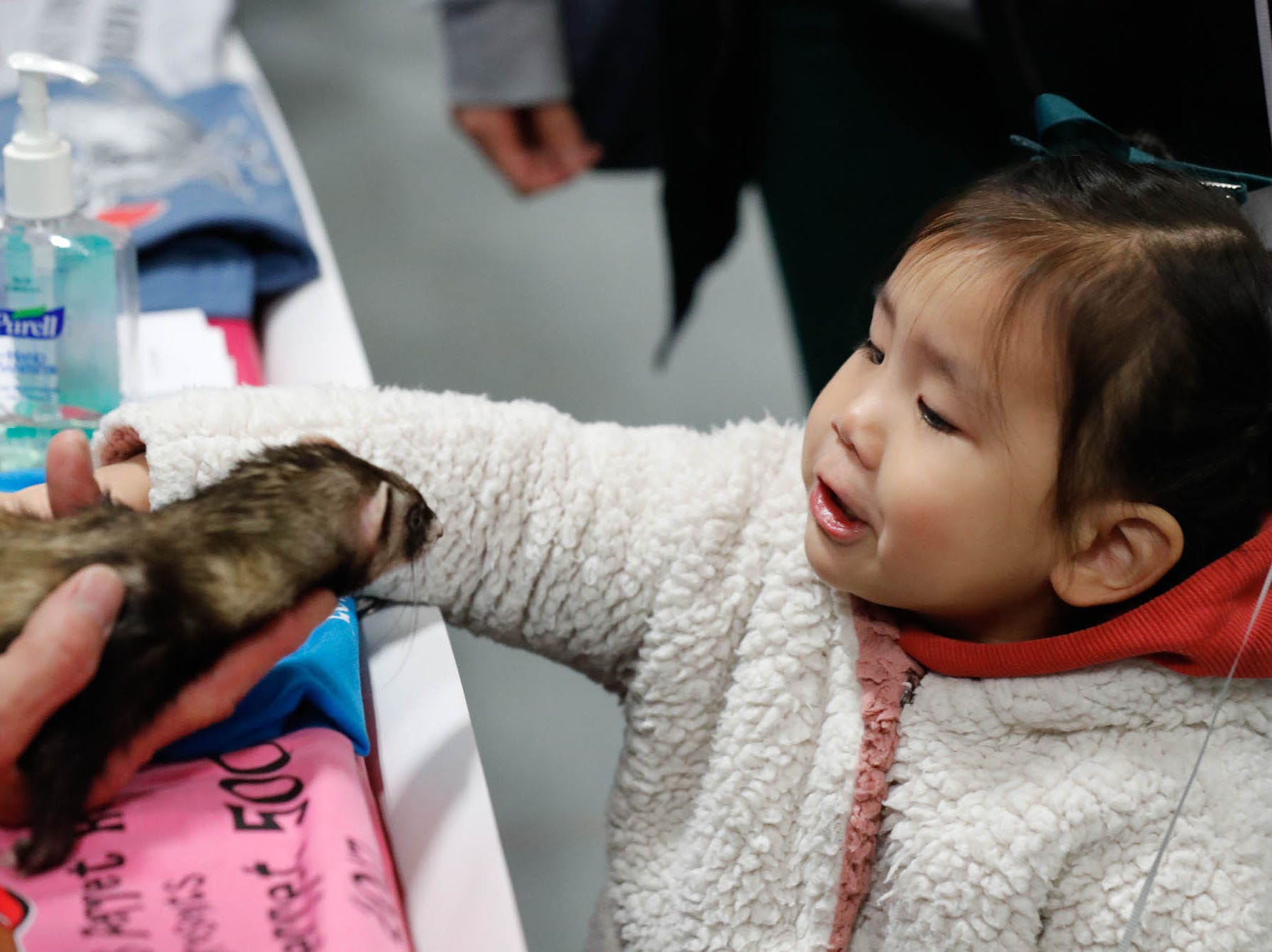 Audrey Baik pets a ferret named Miss Kitty from the Five Points Ferret Rescue at the Great Indy Pet Expo, held at the Indiana State Fairgrounds on Sat. Nov. 10, 2018.