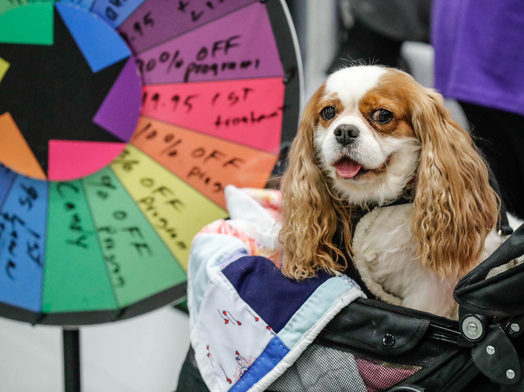 A dog rides in a carriage at the Great Indy Pet Expo, held at the Indiana State Fairgrounds on Sat. Nov. 10, 2018.