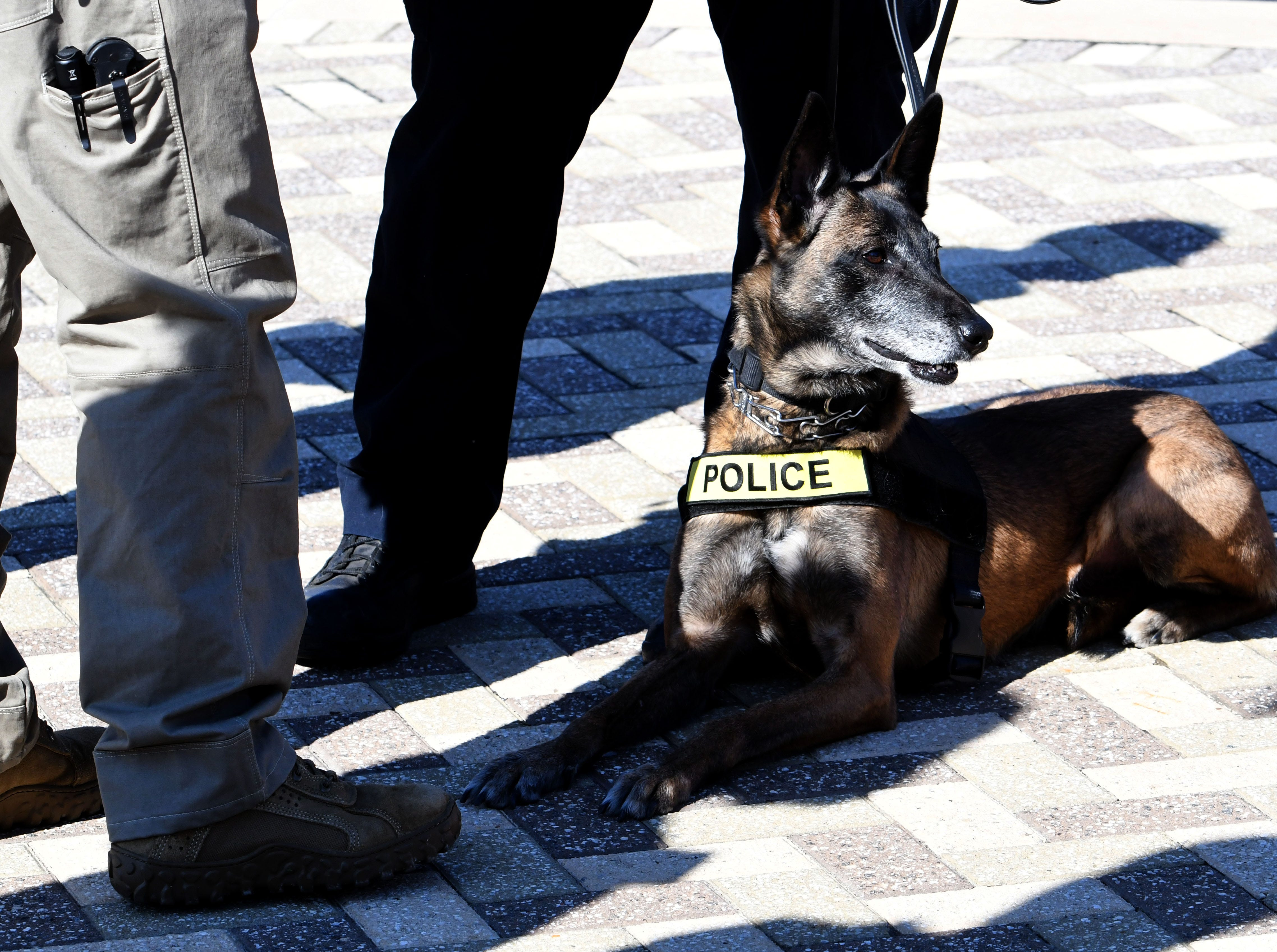 A police dog ready for searches waiting on the Vol Walk before the Kentucky game Saturday, November 10, 2018 at Neyland Stadium in Knoxville, Tenn.