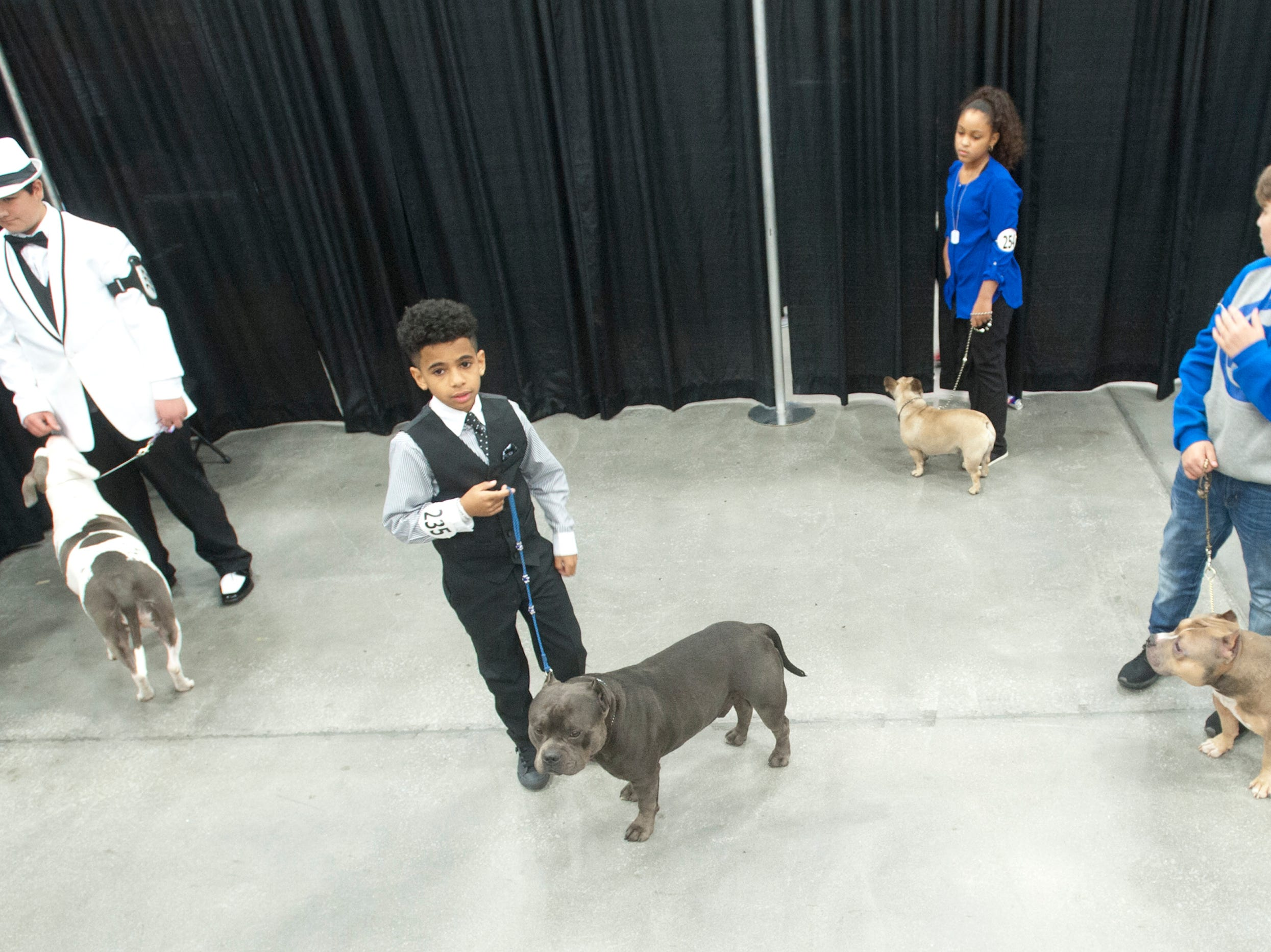 Junior handlers wait to enter the judging ring at the 2018 American Bully Kennel Club's 12th annual confirmation event at the Kentucky Convention Center in Louisville.November 10, 2018