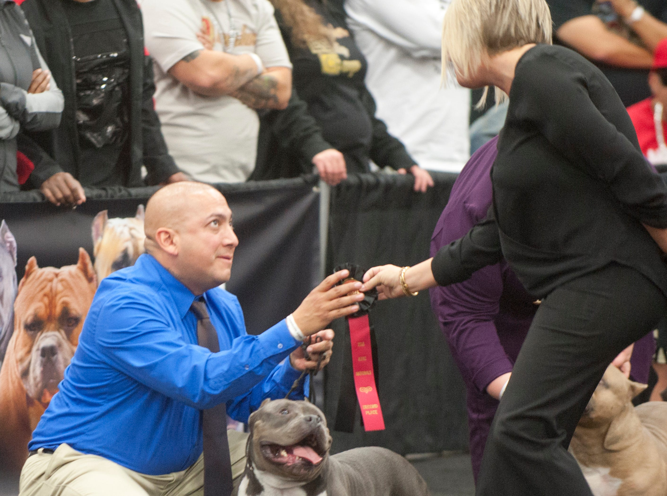 Michael Mata of Winner's Circle Kennels of Cheyenne, WY, hugs his dog Bullgari after placing 2nd in the pocket bull (ages 1-2) category during the 2018 American Bully Kennel Club's 12th annual confirmation event at the Kentucky Convention Center in Louisville. Handing him the ribbon is Judge Rachel Ogletree of Atlanta.November 10, 2018