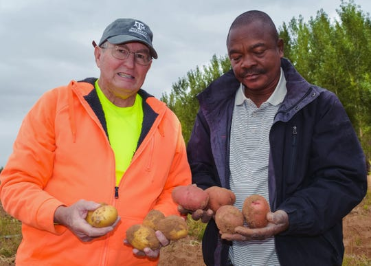 New Mexico State University agricultural researcher Koffi Djaman, right, and Potatoes USA consultant Charles Higgins look at potatoes grown at NMSU Agricultural Science Center at Farmington