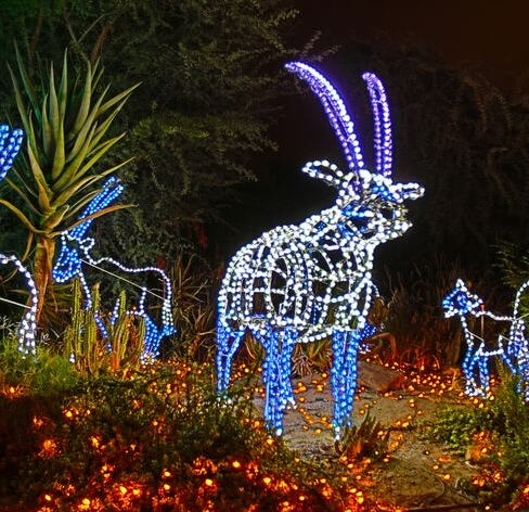 Help name a baby reindeer at ZooLights 2018 at Phoenix Zoo
