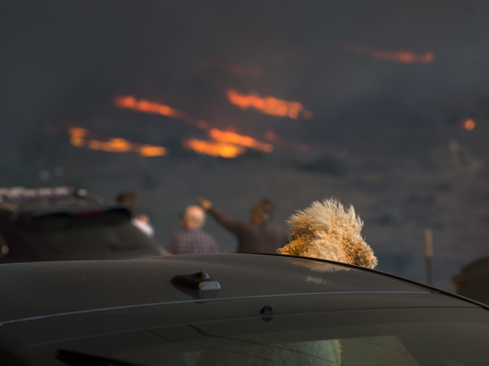 A dog watches from a car as flames approach during the Woolsey Fire on  in Malibu, Calif.