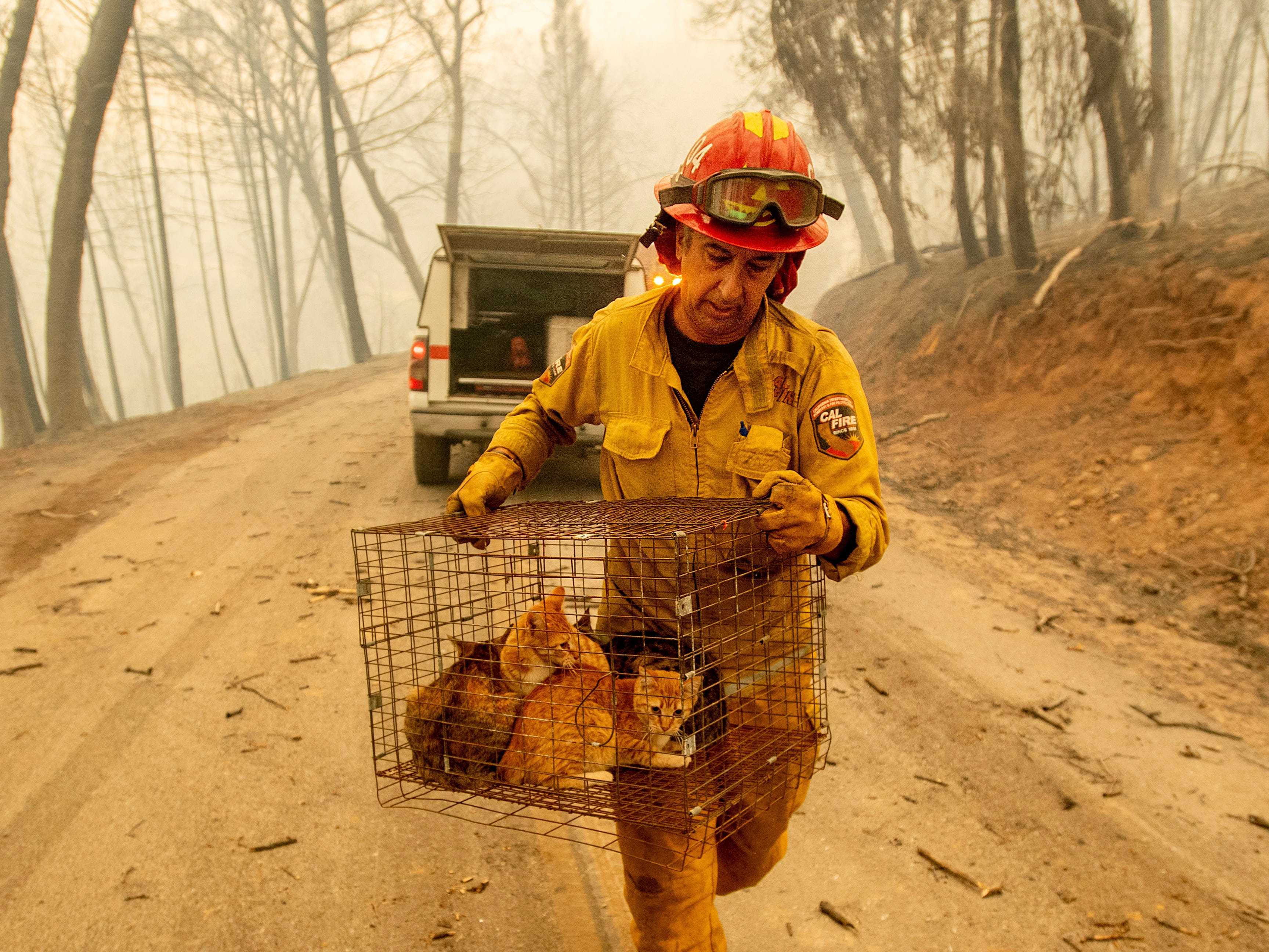 Capt. Steve Millosovich carries a cage of cats while battling the Camp Fire in Big Bend, Calif., on Friday, Nov. 9, 2018. He said the cage fell from the bed of a pickup  as an evacuee drove to safety.