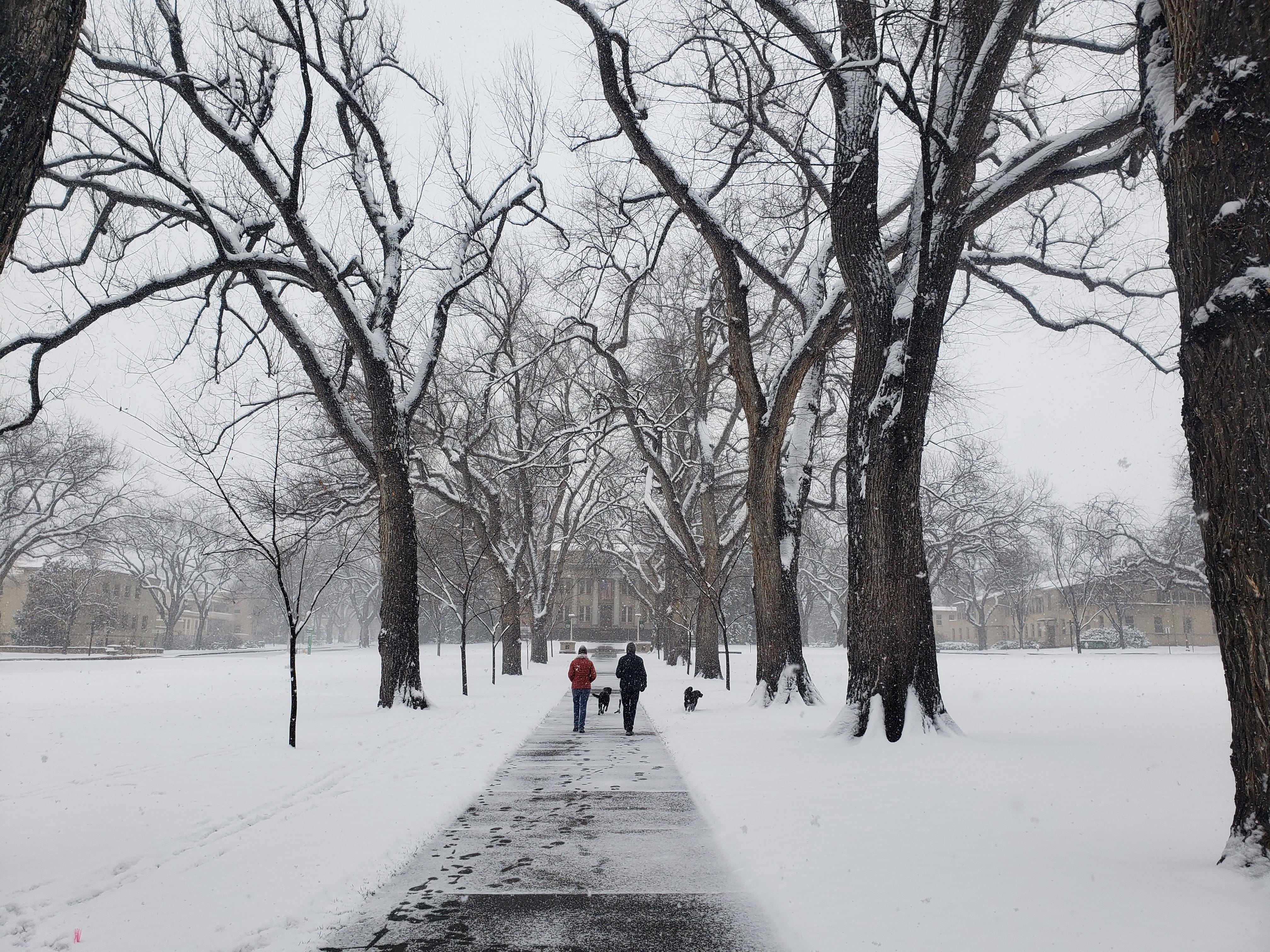 Snow blankets the Oval on Colorado State University's campus on Sunday.