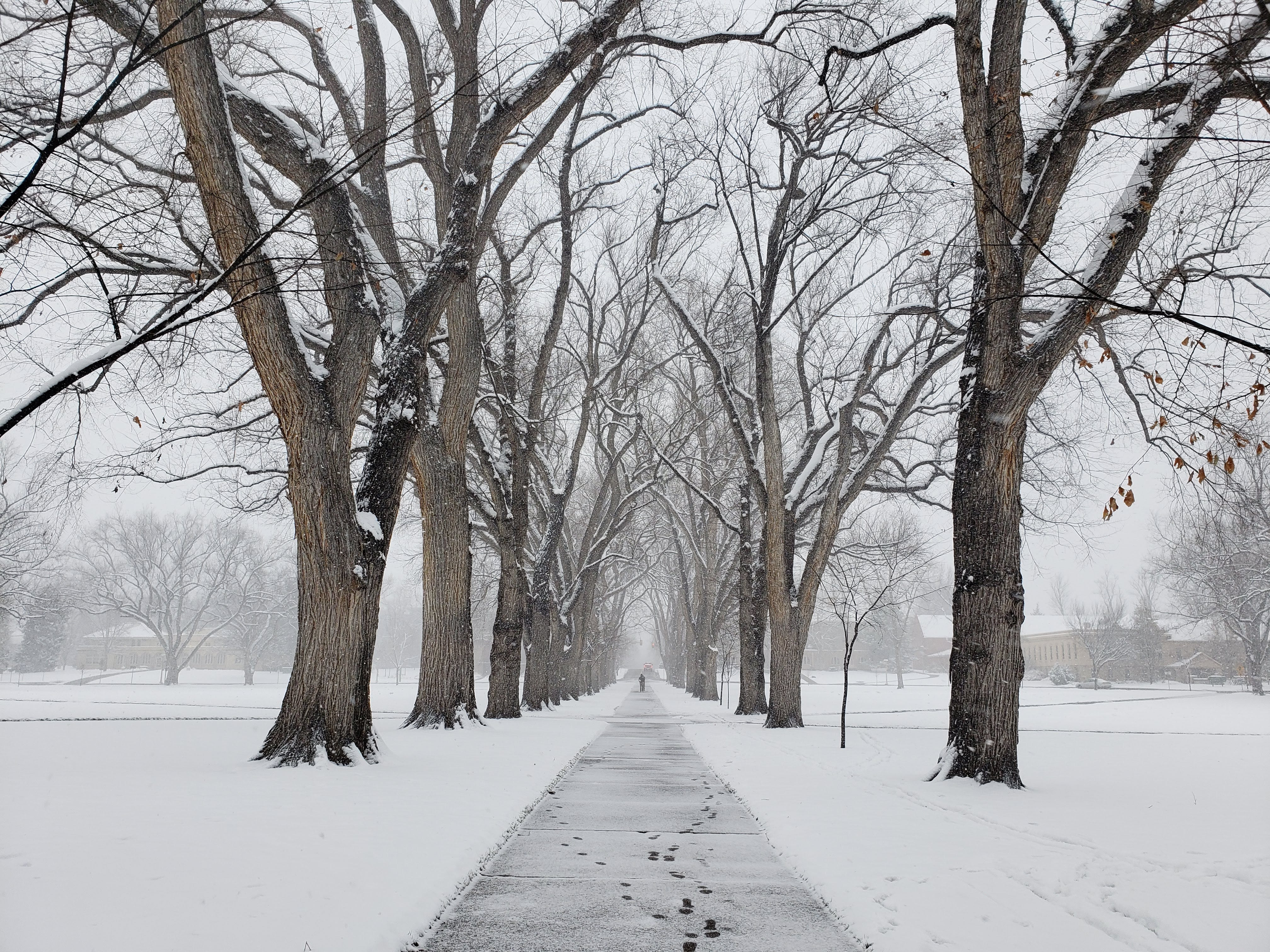 Scenes from a snowy Veteran's Day at the Oval on the Colorado State University campus Nov. 11, 2018.
