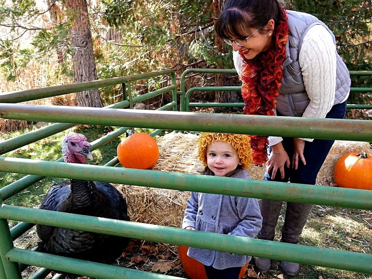 Anastassia Casey and her 2-year-old daughter, Sofia, look at a turkey during the 12th annual Meet the Turkeys event held on Nov. 10, 2018 at Rancho San Rafael in Reno.