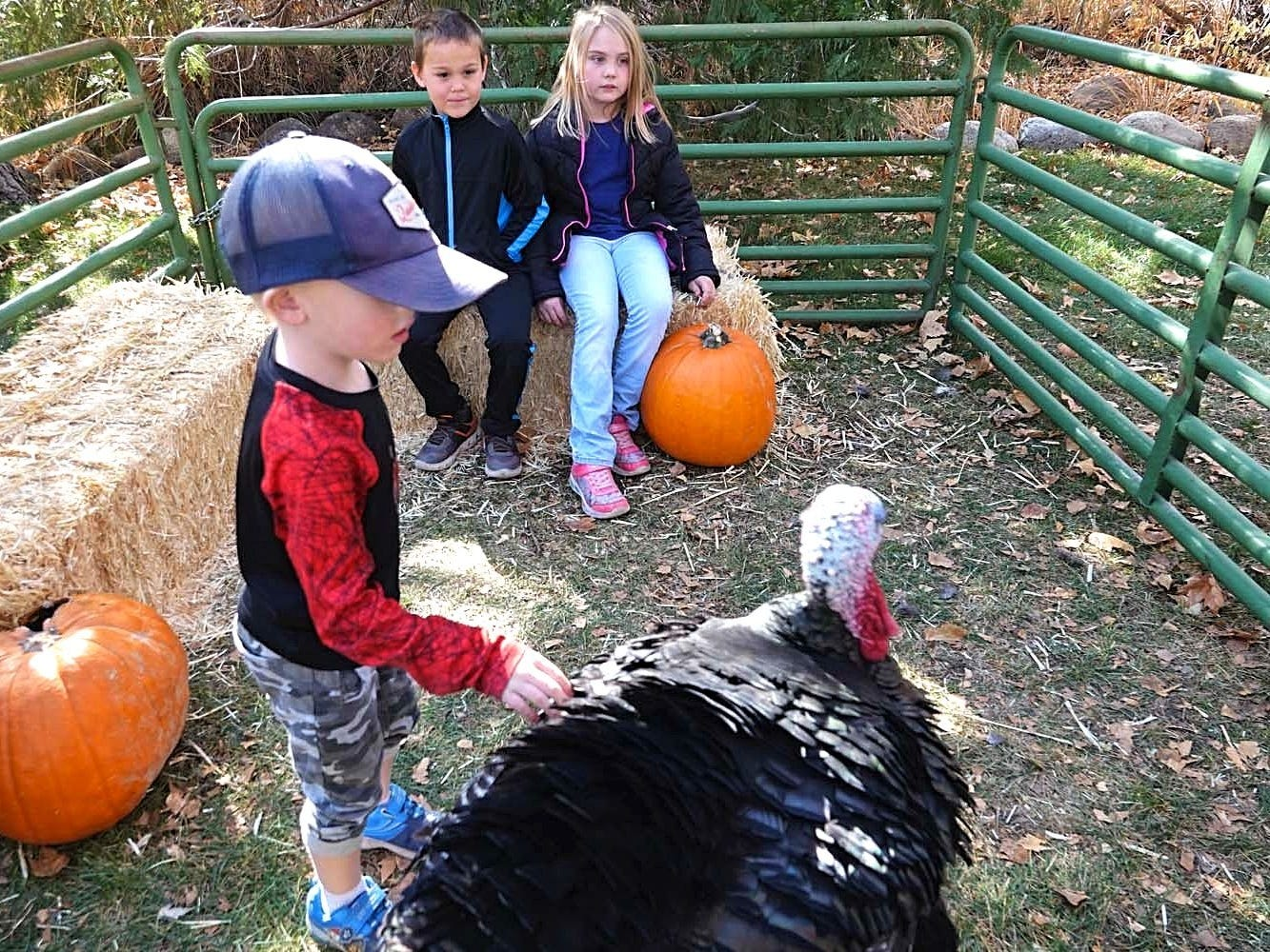 Images taken from the 12th annual Meet the Turkeys event held on Nov. 10, 2018 at Rancho San Rafael in Reno.