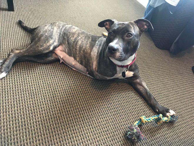 Ramona had surgery to removed a malformed front leg and has recovered.