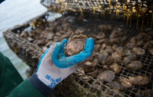 Us Economy Industry Oyster Farming