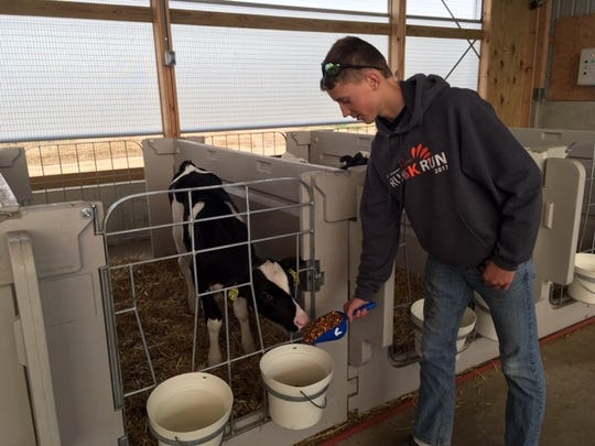 Young heifer calves will someday produce milk that will be make into cheese on the family's on-site cheese plant. The Crave brothers build three new calf barns recently.