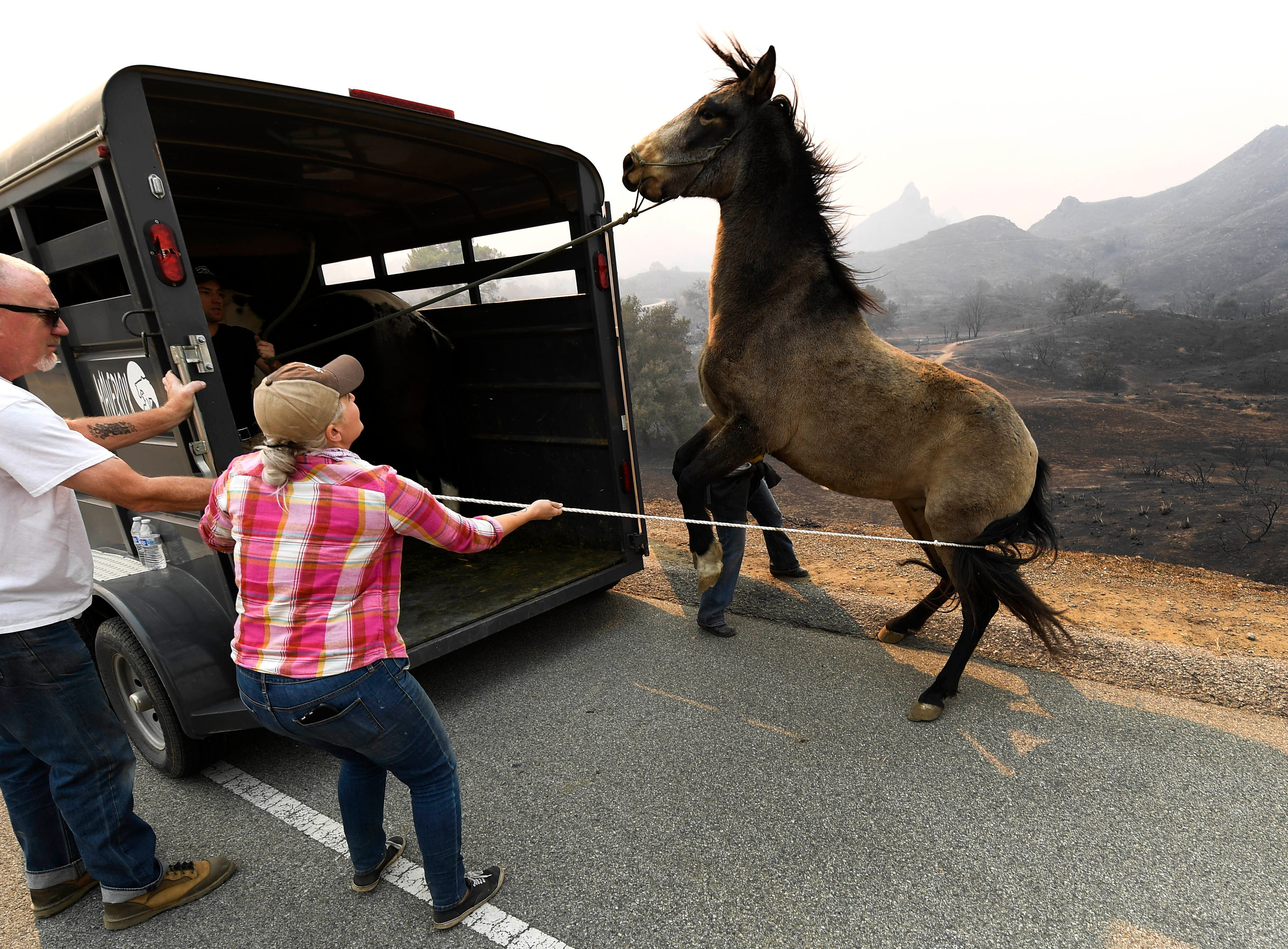 Horses from the White Cloud Ranch on Kanan Road in Malibu are moved from the property on Nov. 10, 2018, after the Woosley Fire blazed through the area.