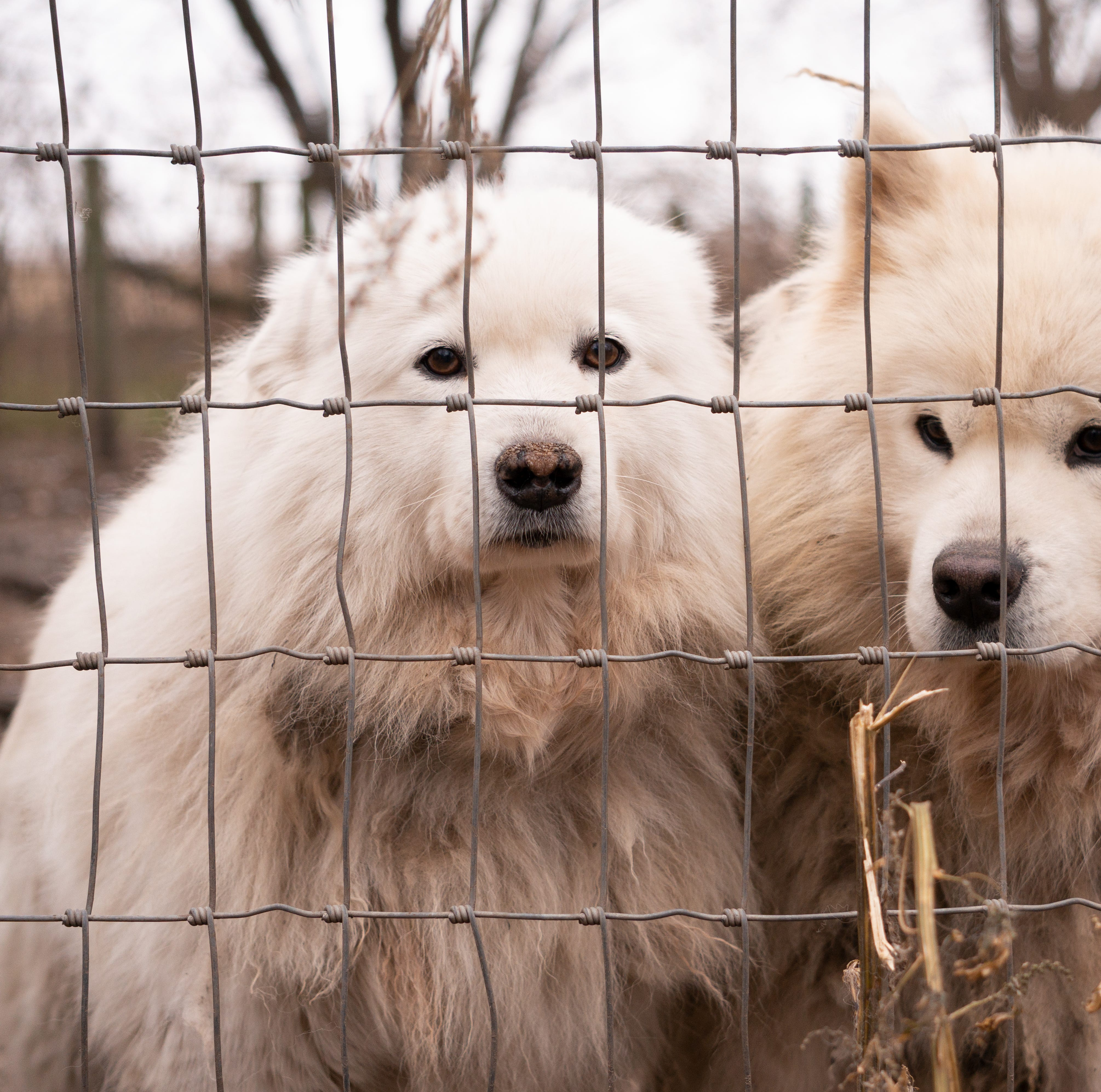 Nearly 170 dogs rescued from Worth County 'puppy mill' after monthslong investigation
