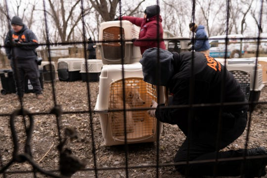 "Nearly 170 dogs were rescued Monday from a rural property in northern Iowa, after a monthslong investigation in Worth County. The dogs — all Samoyeds — were living in ""appalling and overcrowded conditions,"" according to the ASPCA."