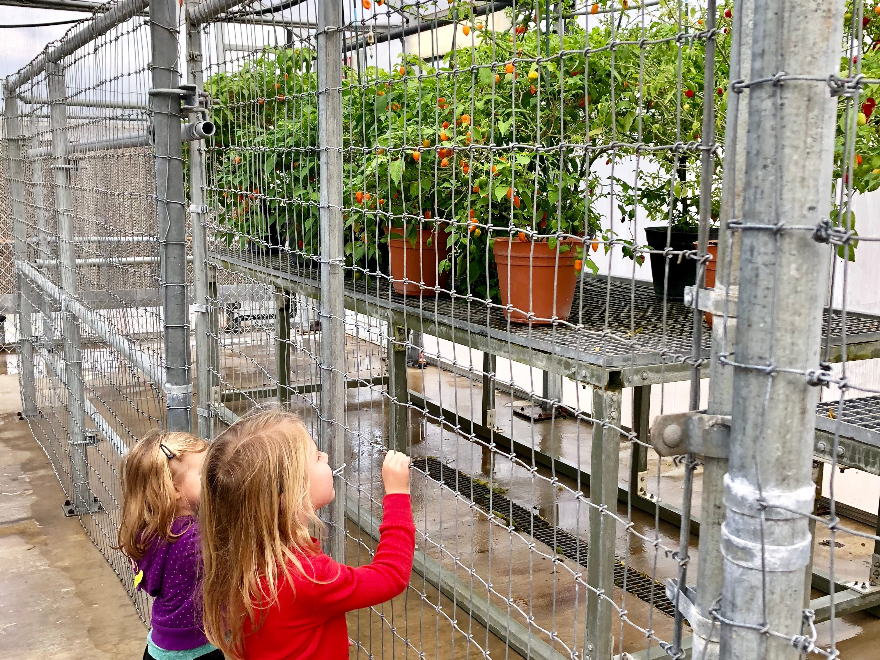 Avery and Marie Guidry check out growing peppers in a greenhouse at the Tabasco plant at Avery Island as they explore the Bayou Teche Byway with their family.
