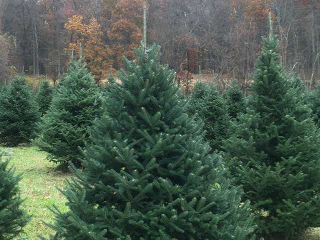 NJ Christmas trees: Here's where to cut