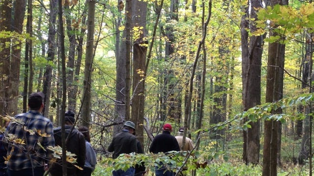 Join Red-tail Land Conservancy for a fall hike at 1 p.m. Friday, Nov. 23, in Sam and Stella Stout Memorial Woods.